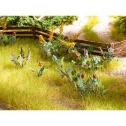 NOCH 14056 - Feld- und Wiesenpflanzen